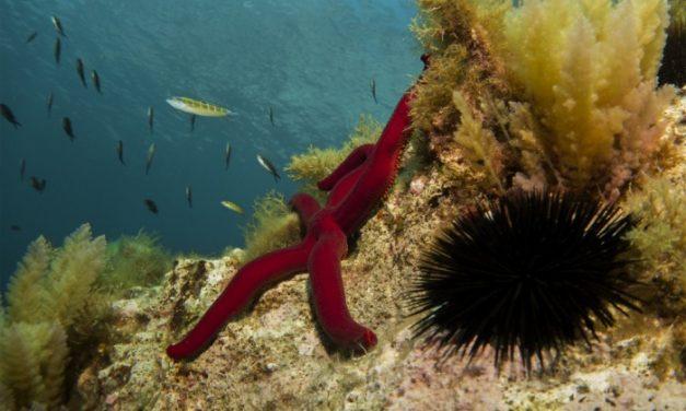 Alerta: plástico en el mar
