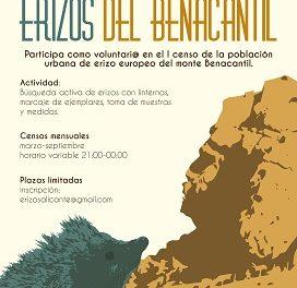 La Universidad de Alicante estudia la población de erizo europeo presente en el monte Benacantil