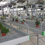 Cultivar alimentos sin residuos de plaguicidas o fitosanitarios químicos, nuevo curso en la Universidad de Alicante